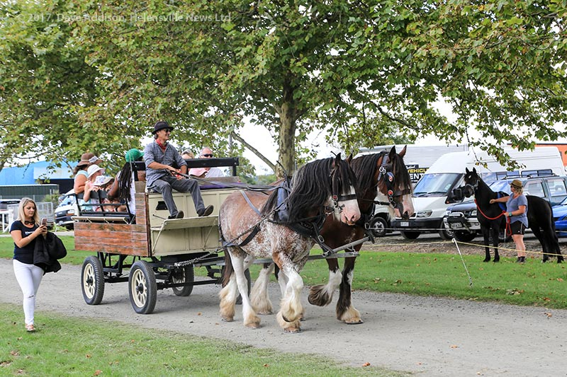 Clydesdale carriage rides
