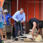 Then Prime Minister John Key powers a shearing machine