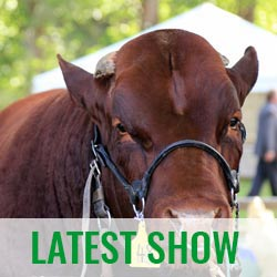 Image Gallery latest Helensville A&P Show