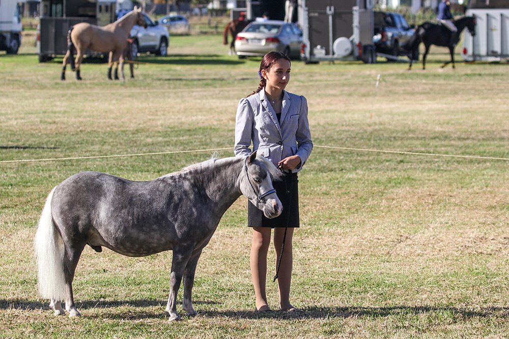 A mini horse and owner at the 2021 Helensville Show